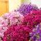 花がたくさん咲く!意外と知らない正しい「花がら摘み」の仕方をチェック!